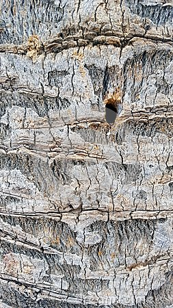 Free Close Up Detail Of Tree Bark Royalty Free Stock Image - 105662236