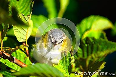 Close up do pássaro