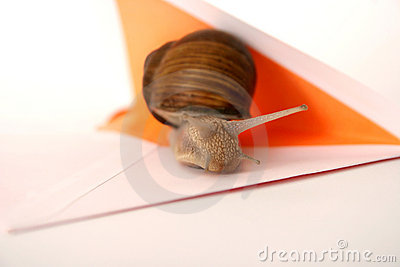 Close Up Do Snail Mail Fotografia de Stock - Imagem: 214492