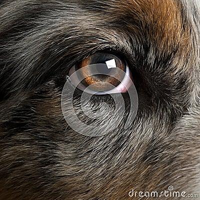Close up of dog s eye