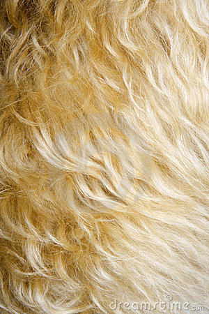Close-up of dog s fur.