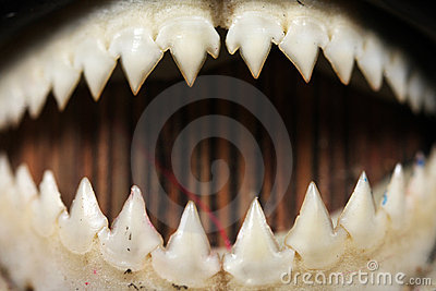 Close-up dos dentes do Piranha