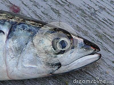 Close up dos peixes a bordo