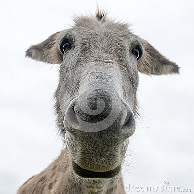Free Close Up Face Of A Donkey Royalty Free Stock Photo - 55594885