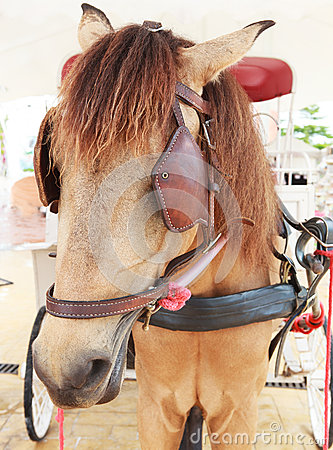 Free Close Up Face Of Working Horse With Eyes Blind Path Stock Photo - 45584440