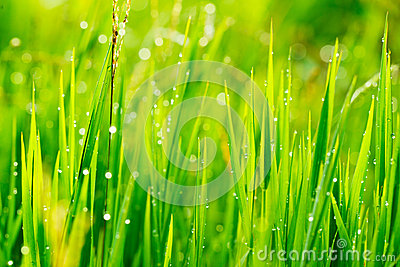 Close up of fresh grass