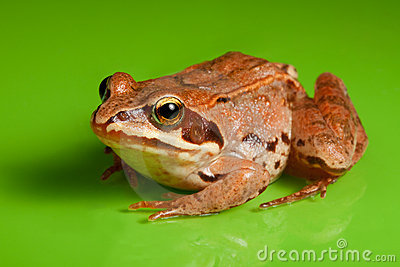 Close-up of the frog