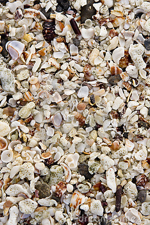 Close-up of the Galapagos Island beach
