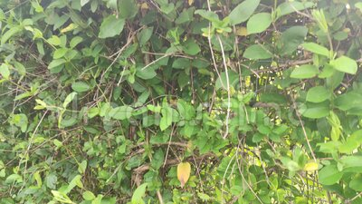A close up of a garden. A close up of a garden. High quality footage stock footage