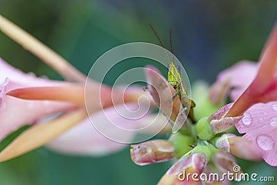 Close up glasshopper on flower
