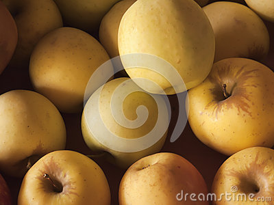 Close-up of golden apples in sunlight