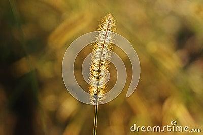 Close Up Of Grass Flower Free Public Domain Cc0 Image