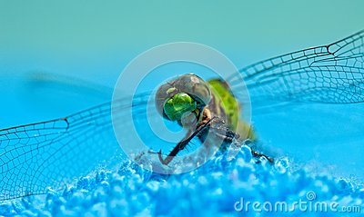 Close-Up of Green Dragonfly