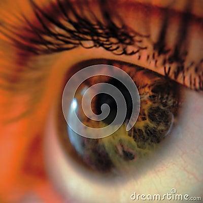 Close Up Of Green Eye Free Public Domain Cc0 Image