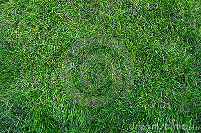 Close-up green grass