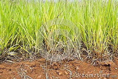 Close-up green grass