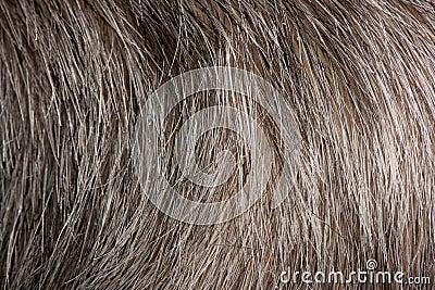 Close-up of grey human hair