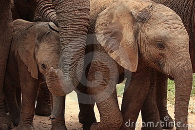 A close up of a herd of elephants