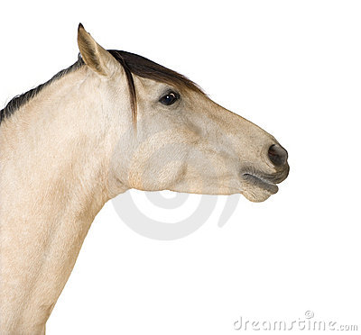 Close up on a Horse