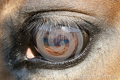 Close up of a horse eye