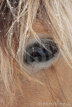 Close-up of horse face