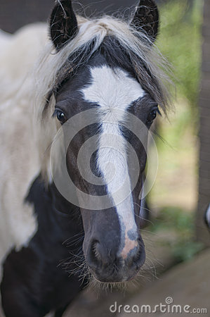 Close up of horses face