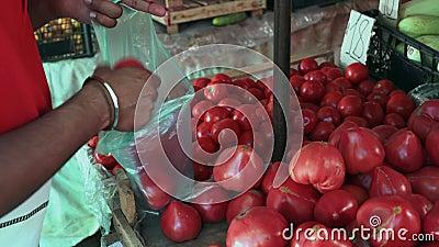 Close-up, Indisch Guy Buys Tomatoes bij de Bazaar stock videobeelden