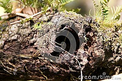 Close up of knot hole oak