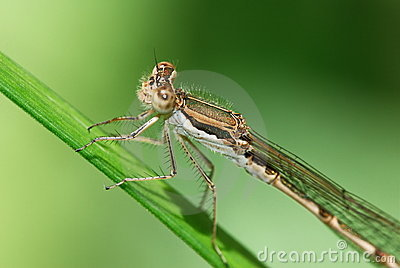 Close up of a large dragonfly
