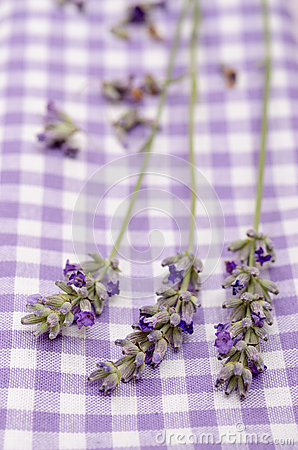 Close up lavender in vertical format