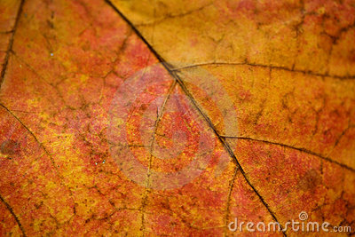 Close up of leaf veins