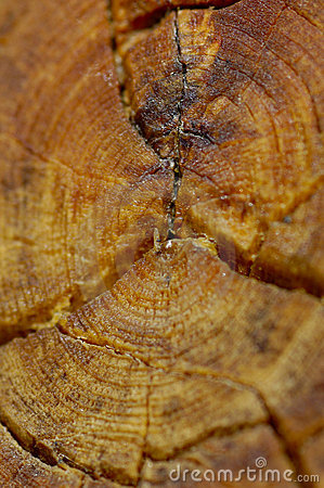 Close-up Log