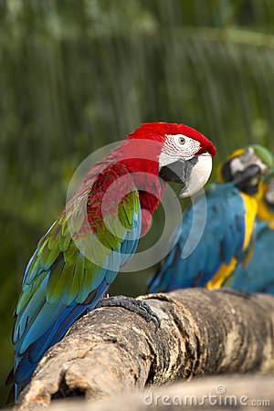Close-Up Macaw