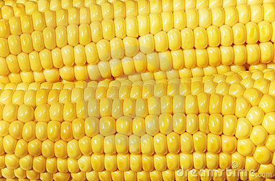 Close-up of maize