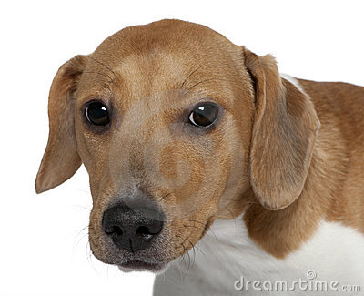 Close-up of Mixed-breed dog, 10 months old