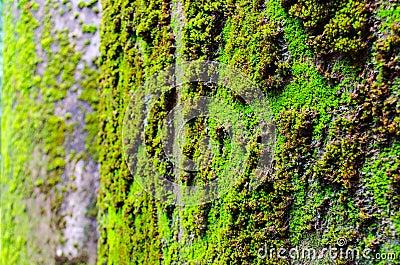 Close up of moss