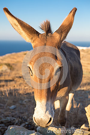 Close up from a mule at the shoreline