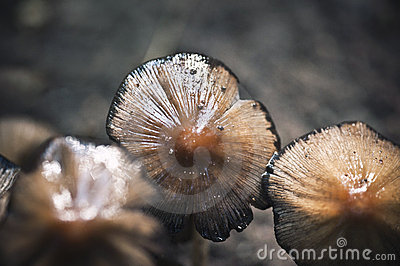 Close up of mushrooms