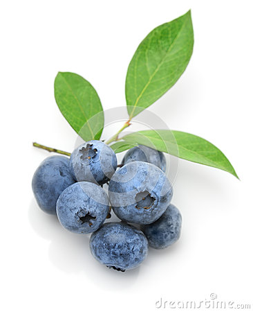 Free Close Up Of A Blueberry Twig Royalty Free Stock Photos - 26035318