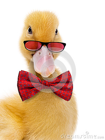Free Close-up Of A Duckling Wearing Glasses And A Bow Tie Royalty Free Stock Photography - 60530817