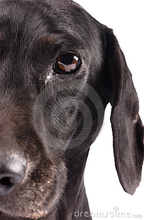 Free Close Up Of Half A Dog Face Stock Photos - 10160463