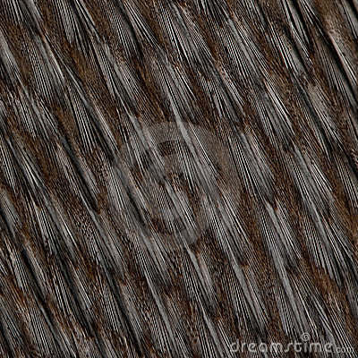 Free Close-up Of Humboldt Penguin Feathers Royalty Free Stock Photography - 13665327
