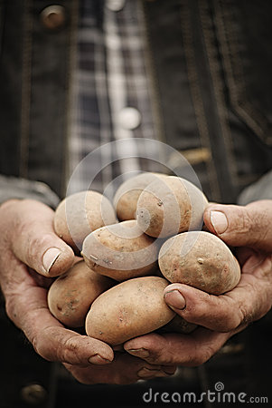 Free Close-up Of Male Hands Holding A Potato Royalty Free Stock Photos - 53957358