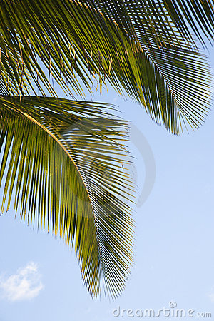 Free Close Up Of Palm Frond. Stock Photo - 2045150