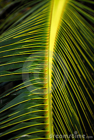 Free Close Up Of Palm Tree Leaves Royalty Free Stock Photos - 959668