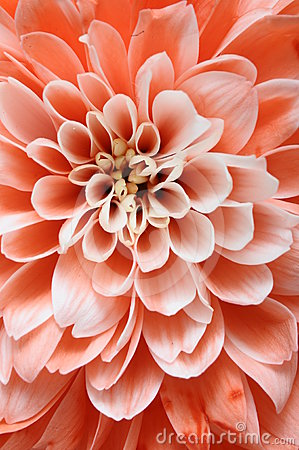 Free Close Up Of Pink Flower Stock Photo - 24395730