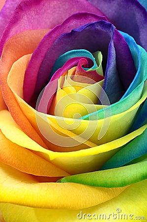 Free Close Up Of Rainbow Rose Flower Royalty Free Stock Image - 67586026