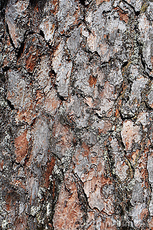 Free Close Up Of Tree Bark Stock Images - 14371244