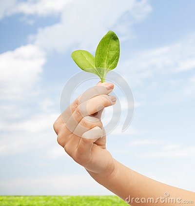 Free Close Up Of Woman Hand With Green Sprout Stock Image - 48951971