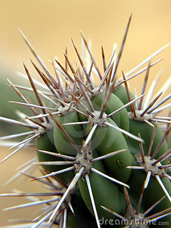 Free Close-up On A Cactus. California. Royalty Free Stock Photo - 163545